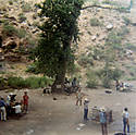 241Indian_gardens_-_grand_canyon.jpg